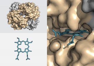 Protein stabilisation